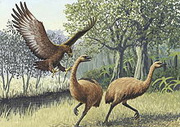 Extinct Haast's Eagle
