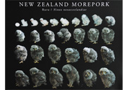 Morepork Owl growth poster